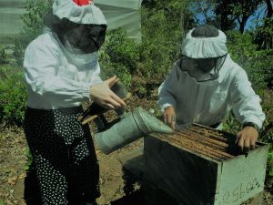 people working with a beehive