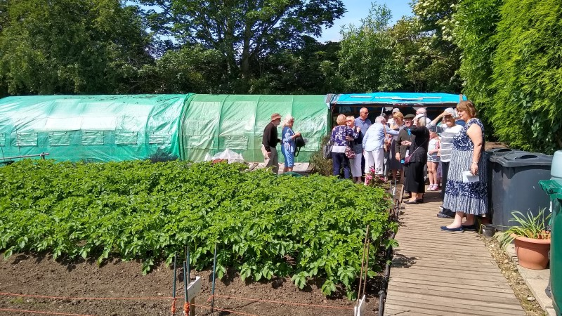 people gathered near vegetable plants